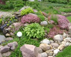 Альпийская горка своими руками – подбираем горные растения