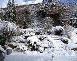 Сад готовится к зиме
